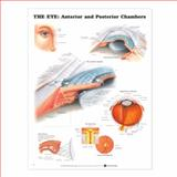 The Eye - Anterior and Posterior Chambers 9781587791338