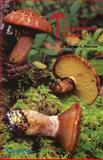 The Mushroom Manual - Tops! Complete for College Class 9780879611613