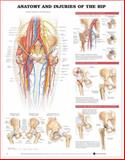 Anatomy and Injuries of the Hip 9781587793820