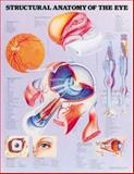 Structural Anatomy of the Eye Anatomical Chart 9781587794346