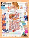 Your Digestive System 9781587797385