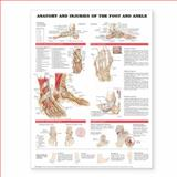 Anatomy and Injuries of the Foot and Ankle 9781587798399